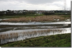 small Cray Marshes